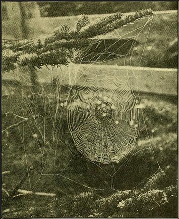 Spider web for Denver Pest Control